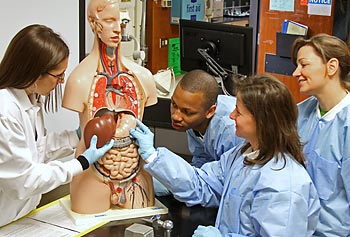 What do I need to become a biomedical engineer?