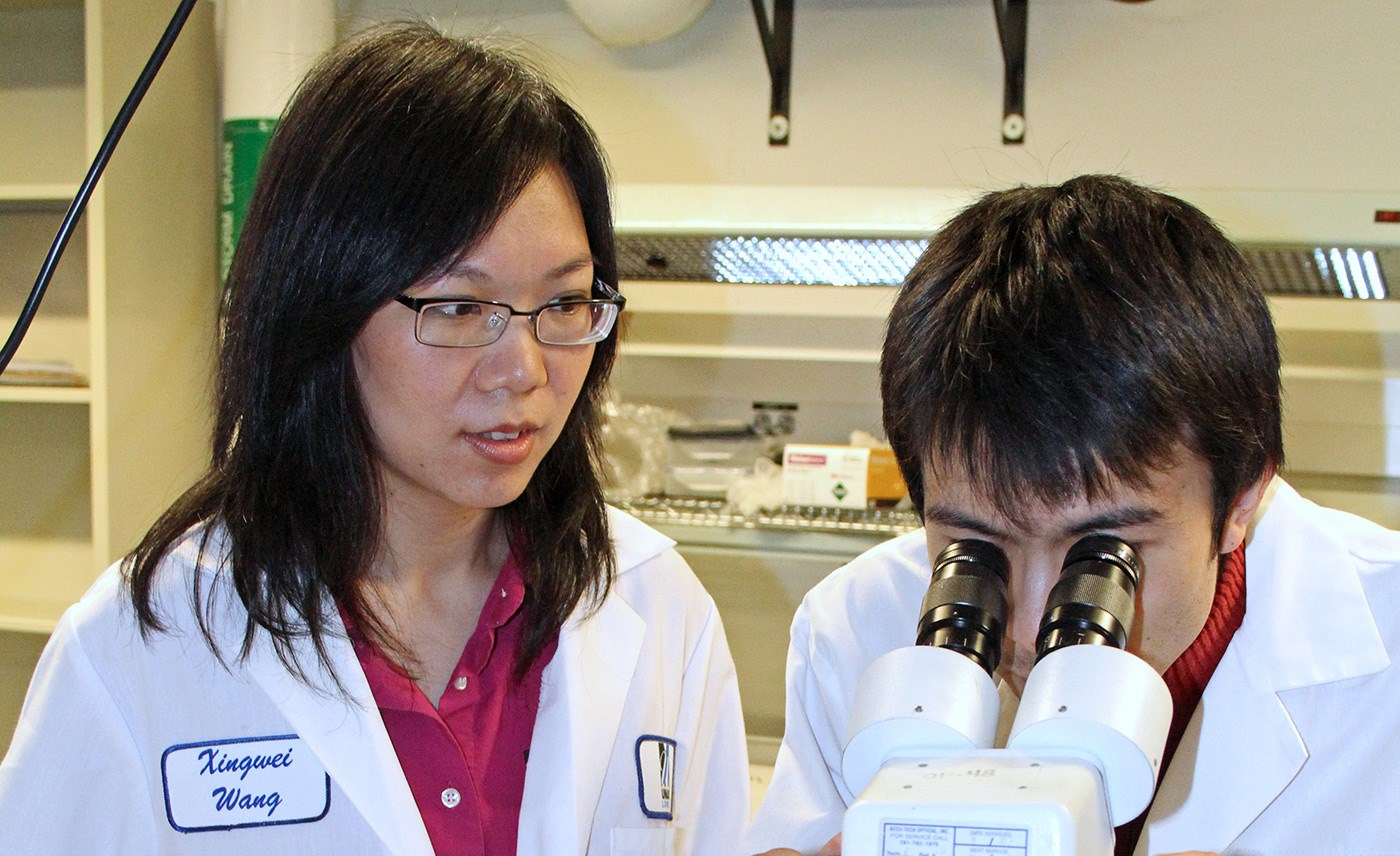 Assoc. Prof Xingwei Wang oversees a male looking into a microscope.