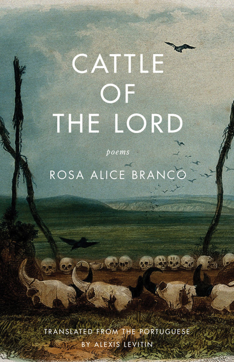 POETRY Cattle of the Lord By   Rosa Alice Branco In these poems, presented in both Portuguese and English, readers find themselves in a darkly comic, sensual, and contradictory world. The author's unorthodox—even blasphemous—religious sensibility yields something ultimately hopeful: a belief that the physical, the quotidian, and the animalistic are holy, too.