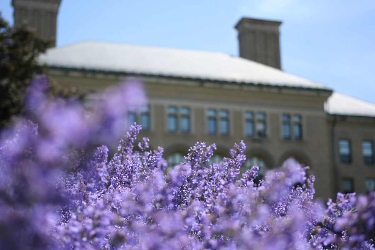 Closeup of purple flowers with Coburn Hall, snow on the roof, in the background