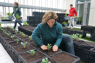 Macayla Cote of Mill City Grows plants a crop at the rooftop garden
