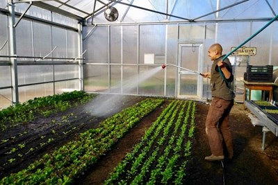 Mill City Grows' Nikki Tolani waters crops inside the greenhouse