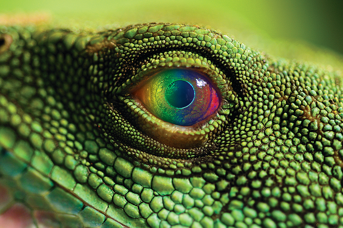"Close up of a lizard's eye with rainbow colors across it. Did you know that numerous birds, insects, reptiles and aquatic animals perceive colors in the ultraviolet region of the spectrum—literally ""over the rainbow?""  Join Charles W. Clark as he applies these discoveries to measurement science and discusses how the ultraviolet influences the science of physics, astronomy and climate change."