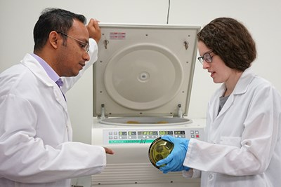 Biomedical engineering major Madison Merrill learns cell-culture techniques in her summer co-op with chemical engineering research scientist Prokash Paul