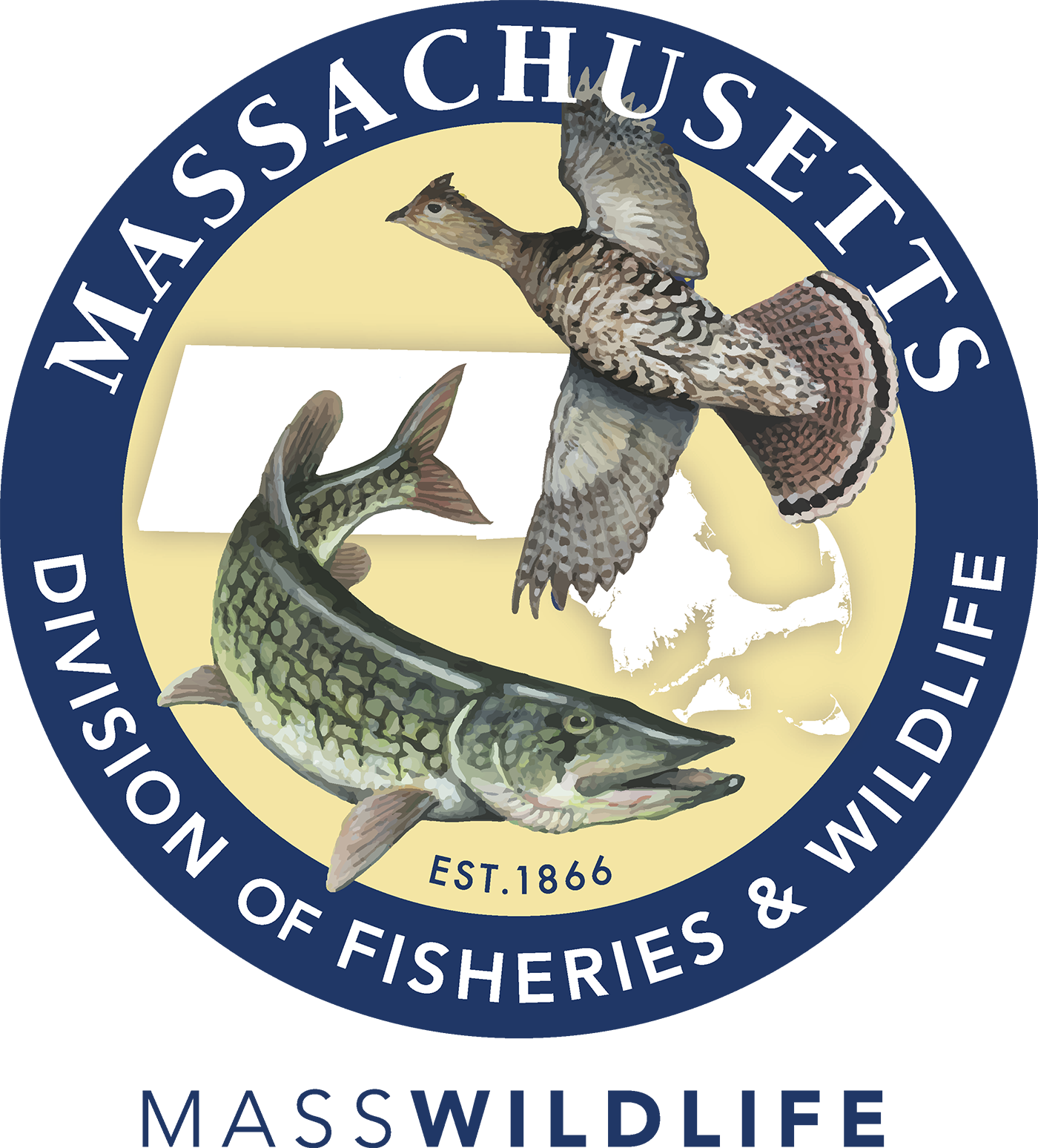 Massachusetts Division of Fisheries and Wildlife logo. MassWildlife is responsible for the conservation of freshwater fish and wildlife in the Commonwealth, including endangered plants and animals. MassWildlife restores, protects, and manages land for wildlife to thrive and for people to enjoy.