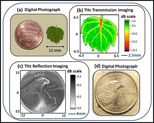 Examples of waveguide-enabled high-resolution terahertz images: (a) shows an optical photograph of a tiny leaf (with a penny for scale) while (b) shows its corresponding high-resolution terahertz transmission image. In the bottom row, the optical photograph of a quarter (d) is shown alongside its terahertz-reflectance image (c).