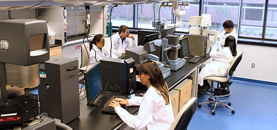 People-in-labs-on-computers-550-opt.jpg