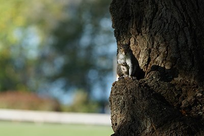 A squirrel sits in a tree behind Allen House on South Campus