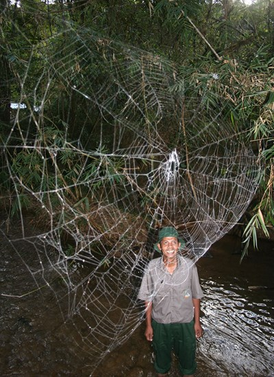 A Darwin's bark spider web stretches across a stream in Madagascar.