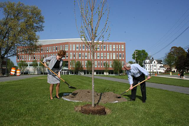 UMass Lowell Chancellor, Jacquie Moloney using a shovel to help plant a tree.