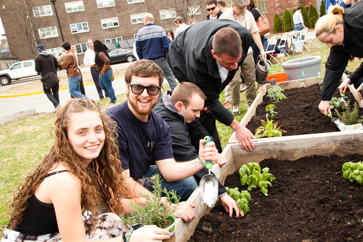 UML students plant herbs in raised garden beds in a community garden on East campus
