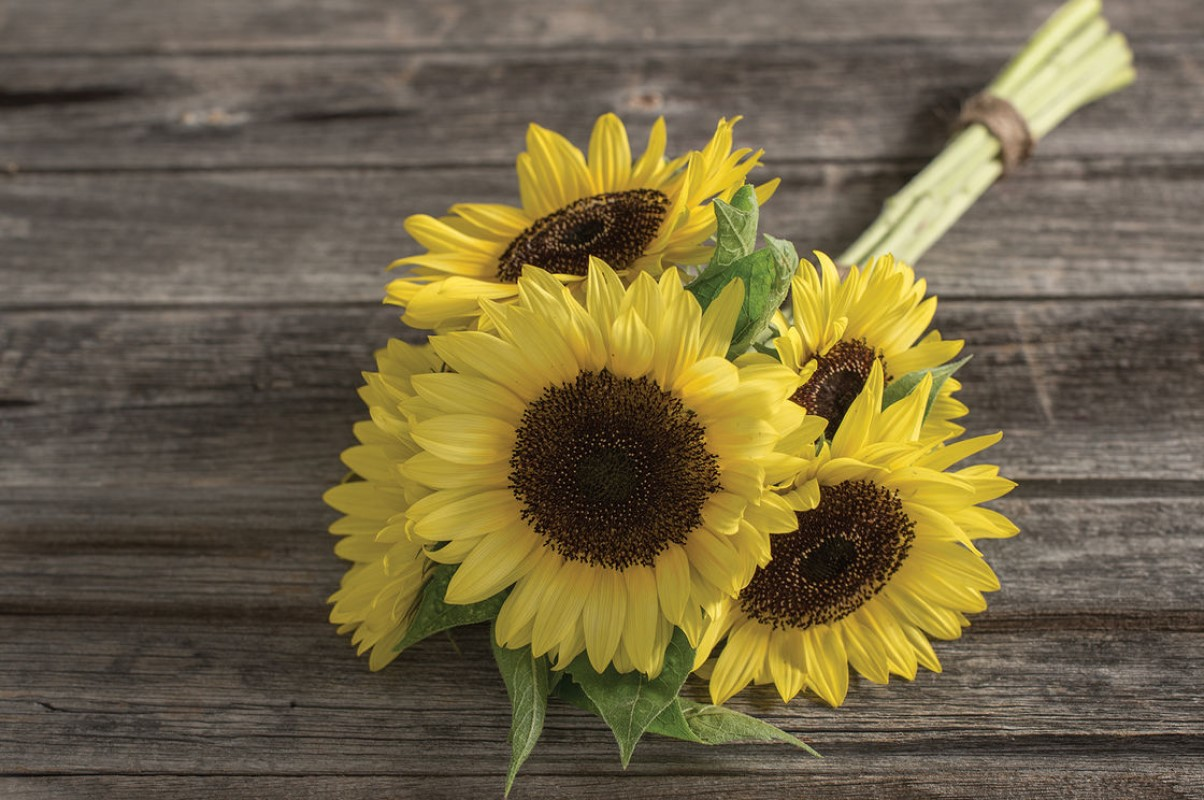 Three sunflowers placed on a simplistic wooden table.