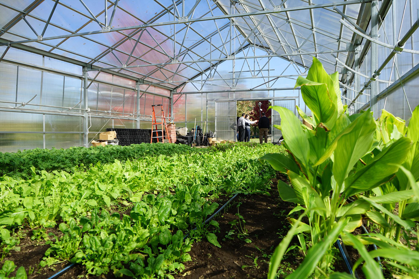 The inside of a greenhouse. UMass Lowell's Office of Sustainability partners with Mill City Grows, a Lowell-based urban food access nonprofit, to develop a robust Urban Agriculture Program.  This new and innovative program and partnership between UMass Lowell and Mill City Grows began in October 2016. It fosters food justice in Lowell by improving physical health, economic independence and environmental sustainability through increased access to land, locally-grown food and education.