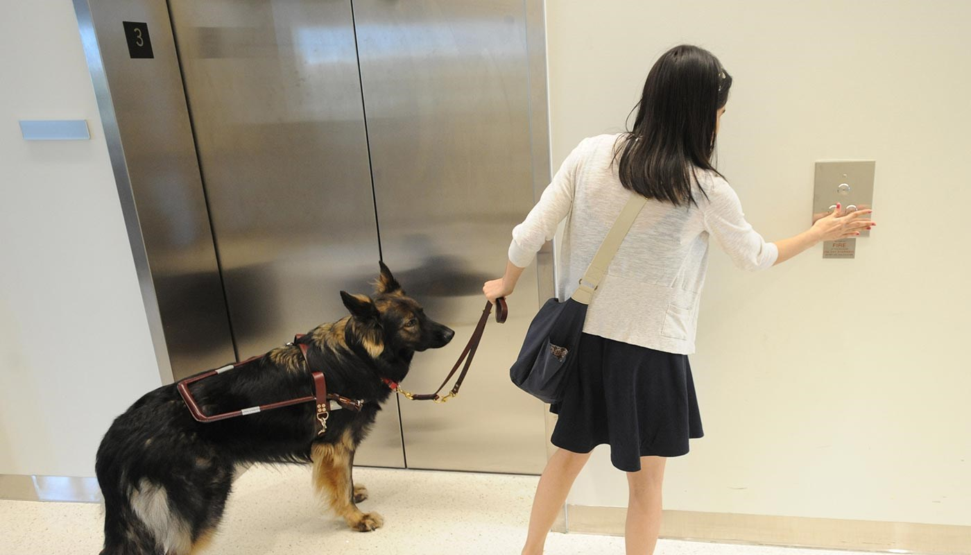 female student with guide dog at elevator