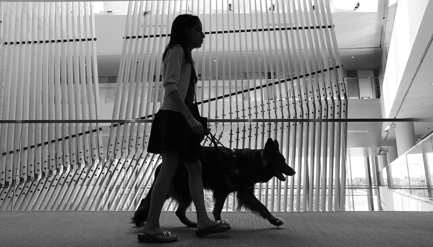 Female student walking with guide dog in University Crossing