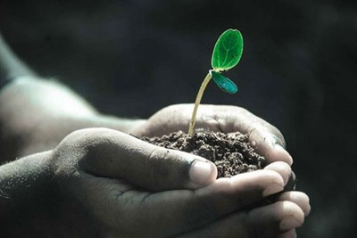 Hands holding dirt with a plant seedling in it