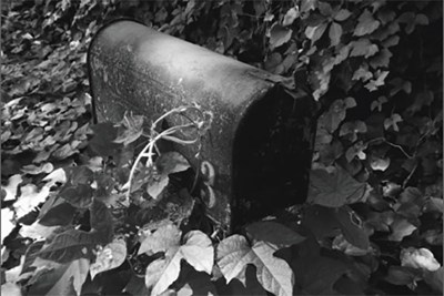 Black and white image of mailbox surrounded by leaves