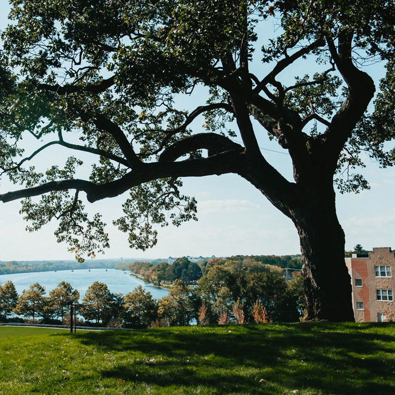 large tree behind UML Allen House overlooking Merrimack River on South campus