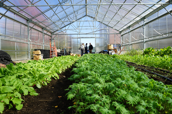 Rows of crops grow inside the university's Urban Agriculture Greenhouse.