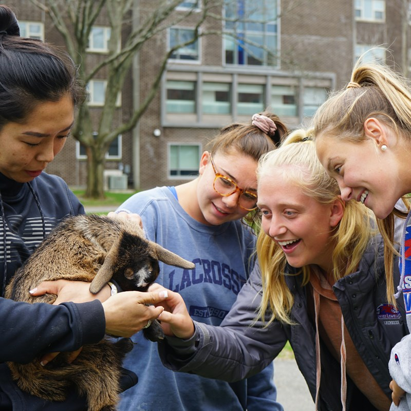 Students pat a baby goat as part of UML's Wellness Center's stress relief events during finals