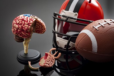 Model brain next to football and helmet
